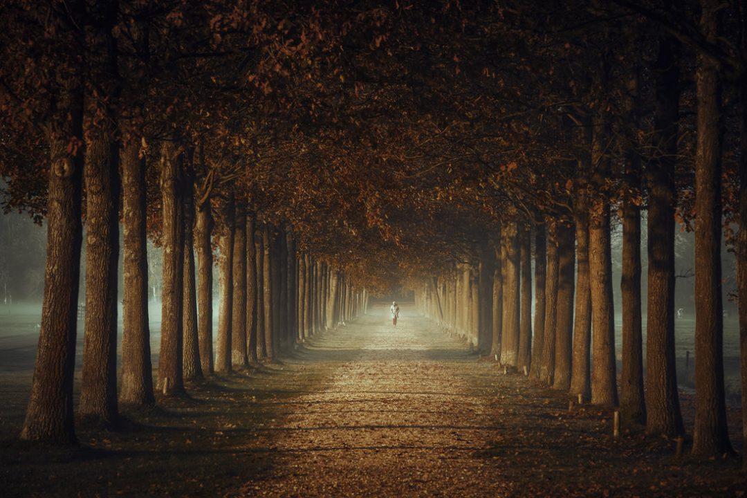 Memory Lane in Trees
